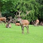 Wildgehege Eifelpark