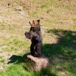 Bärenschlucht