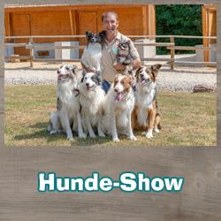Hunde Show