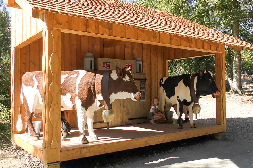 Lustiges Wettmelken auf dem Eifelpark Bauernhof