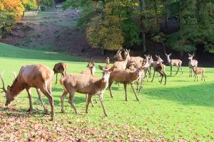 Rotwild Eifelpark