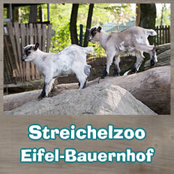 Eifel-Farm / Petting Zoo