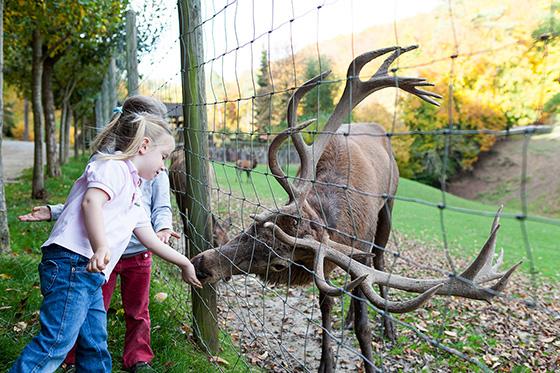 Tiere füttern im Eifelpark