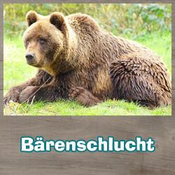 Bärenschlucht | Braunbär