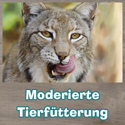 Moderierte Tierfütterung