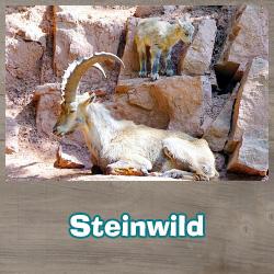 Steinwild