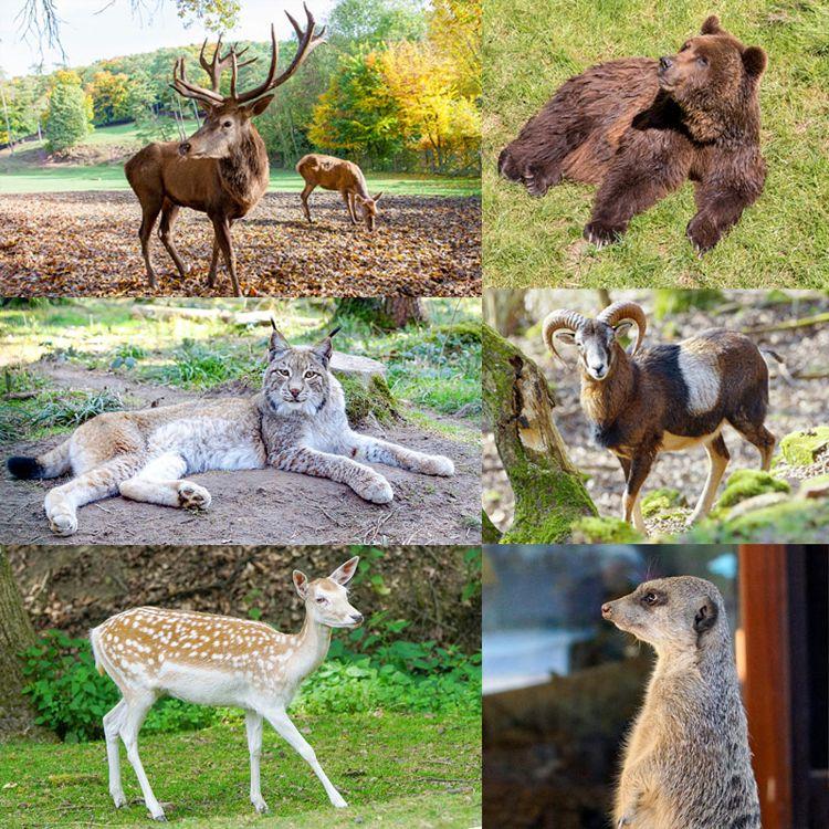 Wildgehege Eifel Eifelpark Tierpark rlp nrw deutschland