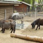 Eifel-Farm Eifelpark