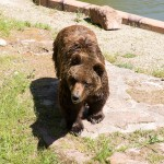 Eifelpark Brown Bears