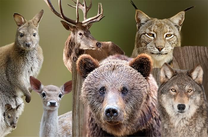 Wildlife Park Germany