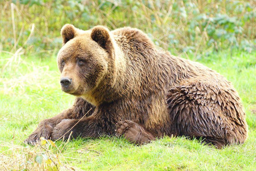 Ravin des ours
