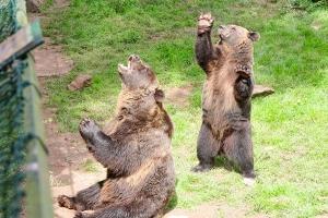 Bärenschlucht Eifelpark