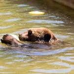 Eifelpark - Ravin des ours