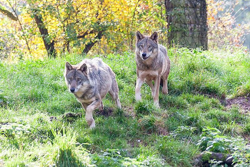 Dal van de wolven